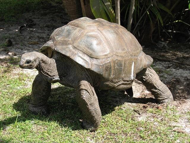 צבים בסיישל